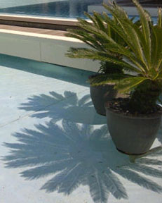The simple beauty in the details of shadows of these potted plants in water.